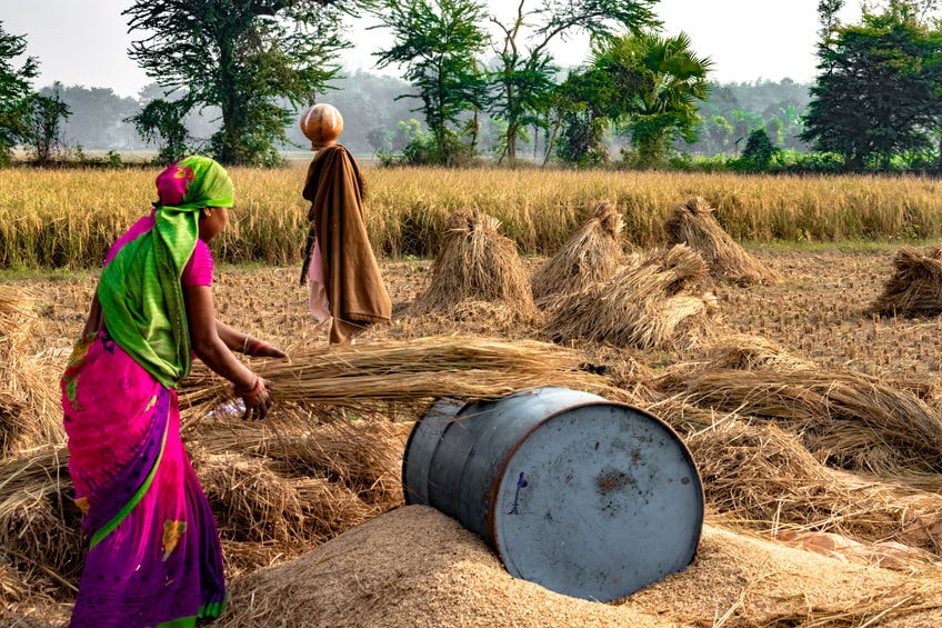 Hard Working Indian Woman Farmer wearing Saree, and working in her fields